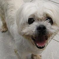 Adopt A Pet :: Curly - Woodstock, GA