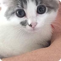 Adopt A Pet :: Ena - Marietta, GA