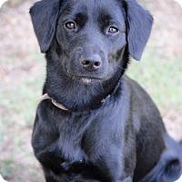 Adopt A Pet :: Harper - oklahoma city, OK