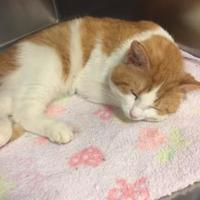 Adopt A Pet :: Jason - Crawfordsville, IN