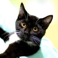 Adopt A Pet :: Beetle - Charleston, SC