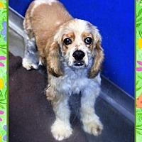 Adopt A Pet :: Charlie - San Jacinto, CA