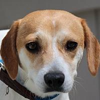 Adopt A Pet :: Ingrid - Locust Fork, AL
