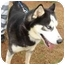 Photo 1 - Husky Mix Dog for adoption in Dahlonega, Georgia - Coon