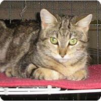 Adopt A Pet :: Melba - lake elsinore, CA