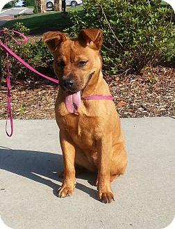 German Shepherd Dog/Labrador Retriever Mix Puppy for adoption in Lawrenceville, Georgia - Penny