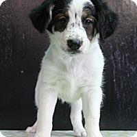 Adopt A Pet :: Coral - Wytheville, VA