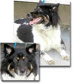 Border Collie Mix Dog for adoption in Stephentown, New York - Sash