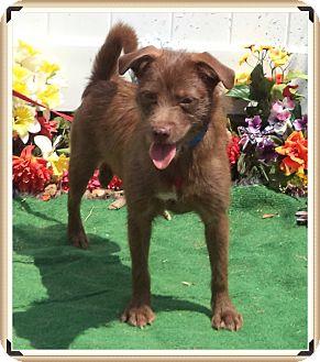 Terrier (Unknown Type, Small) Mix Dog for adoption in Marietta, Georgia - TEDDY (R)