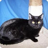 Adopt A Pet :: Purissa - Colorado Springs, CO