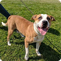 Adopt A Pet :: Crosby - Lisbon, OH