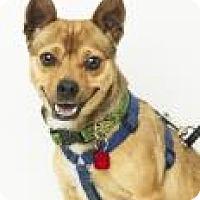 Adopt A Pet :: Salsa - Santa Cruz, CA