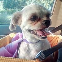 Adopt A Pet :: DARWIN (LM) - Tampa, FL