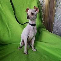 Adopt A Pet :: Bing - Philadelphia, PA