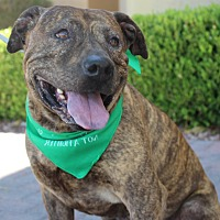 Adopt A Pet :: C-NOTE - Las Vegas, NV