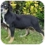 Photo 2 - Hound (Unknown Type) Mix Puppy for adoption in Brenham, Texas - Paige