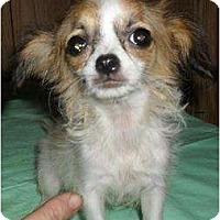 Adopt A Pet :: Precious - Chandlersville, OH