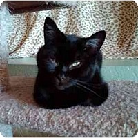 Adopt A Pet :: Bobbin - Erie, PA