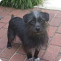 Adopt A Pet :: Kevin - Mocksville, NC