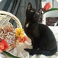 Adopt A Pet :: Yahtzee - Clearfield, UT