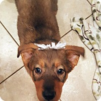 Adopt A Pet :: HANNAH - Winnetka, CA