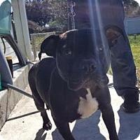 Adopt A Pet :: Jeri - Victoria, TX
