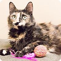 Adopt A Pet :: Spice - Chicago, IL