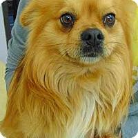 Adopt A Pet :: Dante-ADOPTION PENDING - Boulder, CO