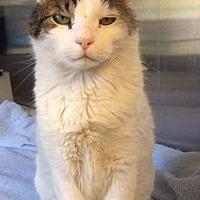 Adopt A Pet :: Lindt - Walden, NY