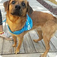 Adopt A Pet :: Owen - San Antonio, TX
