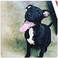 Labrador Retriever Mix Dog for adoption in Sanford, North Carolina - Jetta