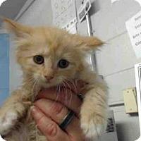 Adopt A Pet :: A505046 - San Bernardino, CA