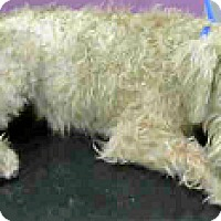 Adopt A Pet :: Shiloh-ADOPTION PENDING - Boulder, CO