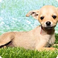 Adopt A Pet :: 521 - Aurora, CO