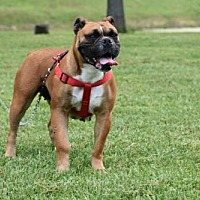 Adopt A Pet :: BELLA MIA - Franklin, TN