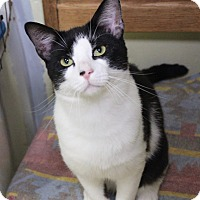 Adopt A Pet :: Winston - Middletown, CT