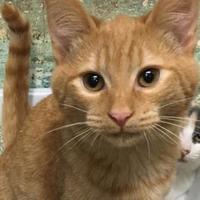 Adopt A Pet :: Magnus - Paducah, KY