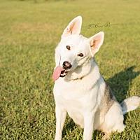 Adopt A Pet :: Richelle - Greeneville, TN