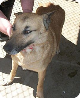 Shepherd (Unknown Type) Mix Dog for adoption in Irmo, South Carolina - Molly