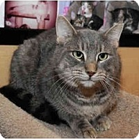 Adopt A Pet :: Buster - Farmingdale, NY