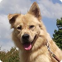 Adopt A Pet :: Parker - Mr. Social - Baltimore, MD