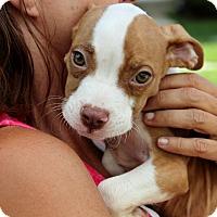 Adopt A Pet :: Manny - Reisterstown, MD