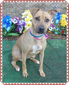 Boxer/Shepherd (Unknown Type) Mix Dog for adoption in Marietta, Georgia - PEGGY SUE (R)