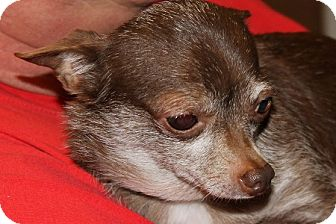 Chihuahua Mix Dog for adoption in Grinnell, Iowa - Fiona Leona