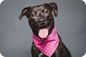 Terrier (Unknown Type, Medium) Mix Dog for adoption in Chicago, Illinois - Biscuit