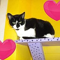 Adopt A Pet :: Mona - Westbury, NY