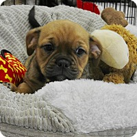 Adopt A Pet :: Hank - Washington, PA