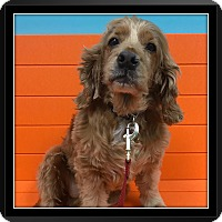 Adopt A Pet :: Conner - Santa Barbara, CA