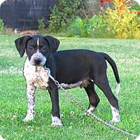 Adopt A Pet :: DEUCE - Bedminster, NJ