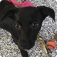 Adopt A Pet :: Julianne - Washington, PA
